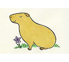 Capybara with Purple Flower  Photographic Print