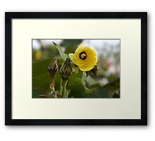 Looking Out ~ Hibiscus Tiliaceus Yellow Bloom Framed Print