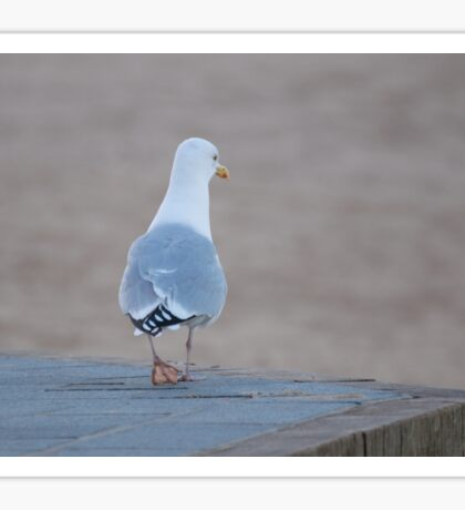 Herring Gull Sticker