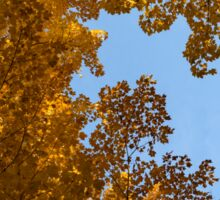 Brilliant Autumn Canopy - a Window to the Sky Horizontal Sticker