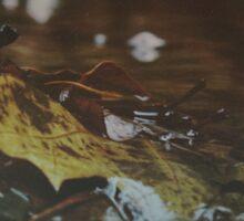 Forest Stream Sticker