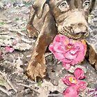 Sweet Lilly by Jennifer Ingram