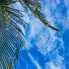 Wispy Skies with Palm by Sherri Fink