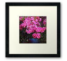 jane's roses with blue jar Framed Print