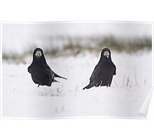 Rooks in the snow Poster