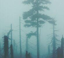 Dark forest Sticker