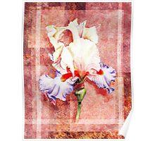 Decorative Iris Painting Poster