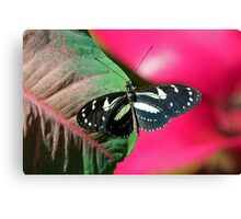 Butterfly and Colorful Leaf Canvas Print