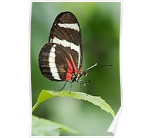 Butterfly and Pollen Poster