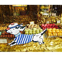 Dog jumped over the macaroon Photographic Print