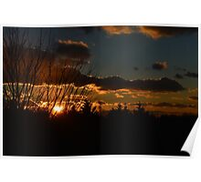 Sunset Behind Trees Poster