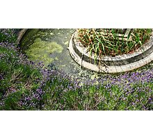 Salvia Surrounding the Fountain Photographic Print