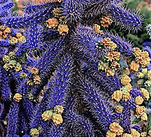 Purple Cane Cholla Cactus by John Butler