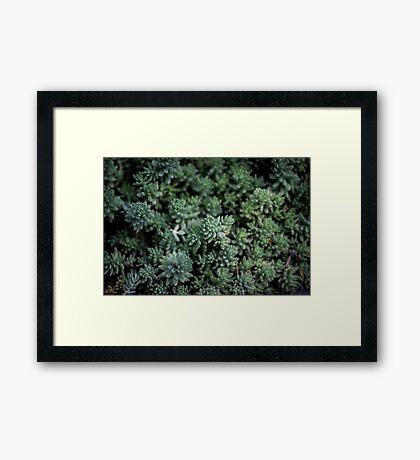 Succulent Plants Nature Fine Art Photography 0026 Framed Print