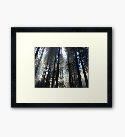 Pine Forest Nature Fine Art Photography 0027 Framed Print