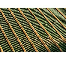 Aerial Field Landscape Nature Fine Art Photography 0029 Photographic Print