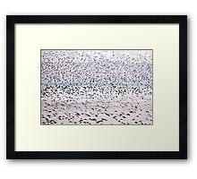 Swirling Flock Framed Print