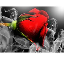 Passionate Red Hot Smoky Rose Photographic Print