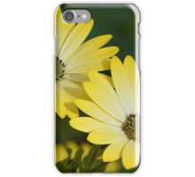 Yellow Cape Daisies iPhone Case/Skin