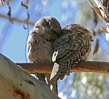 Juvenile Tawny Frogmouths by Emmy Silvius