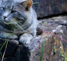 Cat Photograph Sticker