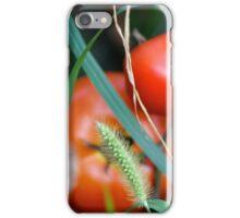 Tomato Garden Photograph iPhone Case/Skin
