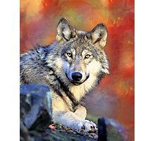 Beautiful Wolf Art Photographic Print