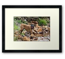 Red boxer beside the water Framed Print