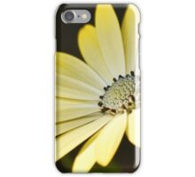 Sun Daisies iPhone Case/Skin