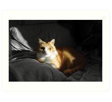 Mr Ginger Cat Art Print