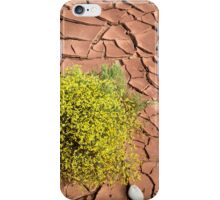 Survivor in the Desert iPhone Case/Skin