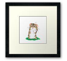 Sad hamster Framed Print