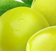 Three green olives Sticker