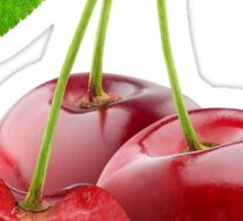 Three sweet cherries Sticker