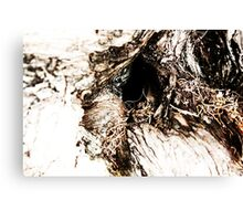 Hole in Tree Trunk Canvas Print