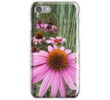 echinacea in the garden iPhone Case/Skin