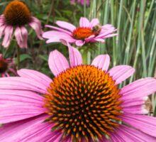 echinacea in the garden Sticker