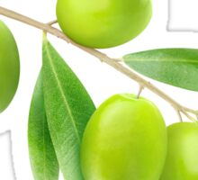 Branch with green olives Sticker