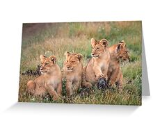 Four cubs Greeting Card