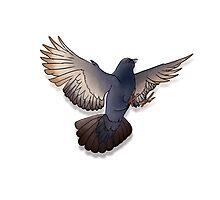 Humphrey the Pigeon Photographic Print