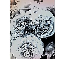 Blue Roses Photographic Print