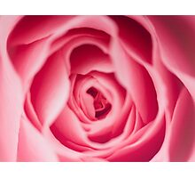 Rose Macro Photographic Print