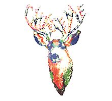 Chase Me Stag Photographic Print