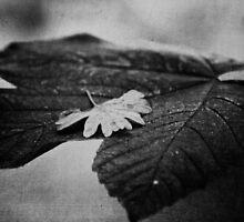 Leaf Love by Vicki Field