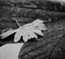 Leaf Love Sticker