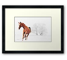 A Frolic In The Snow Framed Print