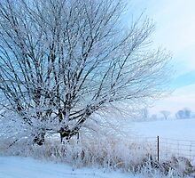 Covered in ice by Heather King