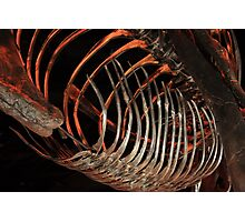 Houston Museum of Natural Science Photographic Print