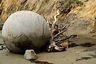 A Moeraki Boulder - New Zealand by Barbara Burkhardt
