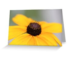Macro Black Eyed Susan 1 Greeting Card